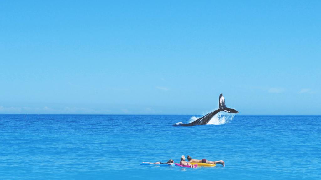 Trois personnes regardant une baleine - Cannes - Unsplash